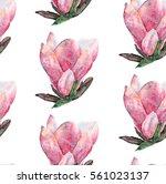 magnolia flower seamless... | Shutterstock . vector #561023137