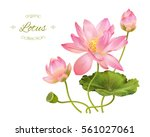 Stock vector vector realistic illustration of lotus flowers and leaves isolated on white background design for 561027061