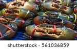 Serrated Mud Crab  Mangrove...