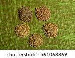 different grains on green... | Shutterstock . vector #561068869
