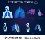 respiratory system  diagram of... | Shutterstock .eps vector #561132601