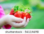Fresh Strawberries In The Hand...