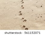 Dog Footprints In The Sand