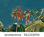 tropical garden and sky scene.... | Shutterstock . vector #561232054