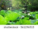 Lotus Field At Royal Botanic...
