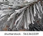 Hoarfrost On The Leaves Of An...