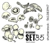 hand drawn mushrooms set.... | Shutterstock .eps vector #561383947