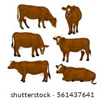 Brown Cattle Set. Cows Standin...
