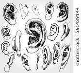 doodled ears   Shutterstock .eps vector #561439144