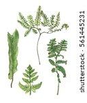 set of watercolor forest ferns | Shutterstock . vector #561445231