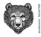wild bear vector image for... | Shutterstock .eps vector #561447985
