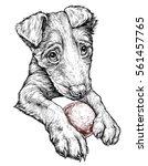 cute puppy with a ball. vector...   Shutterstock .eps vector #561457765