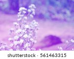 white flowers in soft color and ... | Shutterstock . vector #561463315