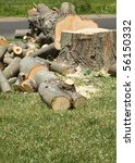 a tree  freshly chopped down... | Shutterstock . vector #56150332