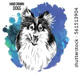 collie. drawing by hand in... | Shutterstock .eps vector #561513904