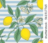 lemon with nautical striped.... | Shutterstock .eps vector #561517765