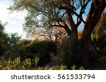 Small photo of Cagnes-sur-Mer, FRANCE - NOVEMBER 20, 2014: Garden of Musee Renoir at Les Collettes.