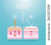 collagen solution serum and...   Shutterstock .eps vector #561557209