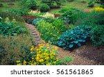 a bog gardens in early summer... | Shutterstock . vector #561561865