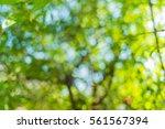 blur background tree in garden... | Shutterstock . vector #561567394