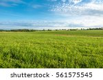 grass field  green spring... | Shutterstock . vector #561575545