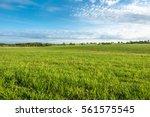 Grass Field  Green Spring...