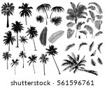 Stock vector set constructor from realistic black silhouettes isolated tropical palm trees branch and separate 561596761
