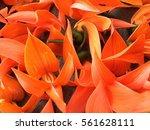 bustard teak | Shutterstock . vector #561628111