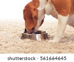 dog drinks water isolated on... | Shutterstock . vector #561664645