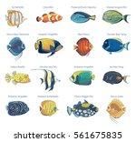 vector set of tropical fish.... | Shutterstock .eps vector #561675835