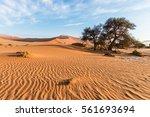 the scenic sossusvlei and... | Shutterstock . vector #561693694