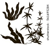 seaweed black silhouettes ... | Shutterstock .eps vector #561695284