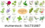 big vector set of popular... | Shutterstock .eps vector #561731887