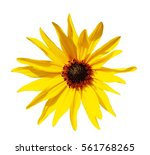 Single Yellow Flower Isolated...