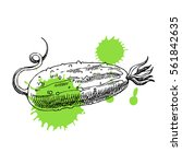 hand drawn cucumber. can be... | Shutterstock .eps vector #561842635