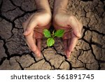 hands holding a tree growing on ... | Shutterstock . vector #561891745