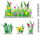 Stock vector spring flowers growing in the garden crocus tulips and daffodils isolated on white background 561898444