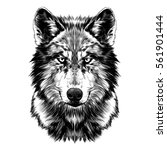 wolf face sketch vector | Shutterstock .eps vector #561901444