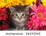 Stock photo tabby kitten with colorful flowers on white background 56192545