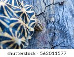 close up of india turtle or... | Shutterstock . vector #562011577