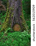 Closeup Of Ancient Tree With...