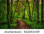 colorful summer landscape.... | Shutterstock . vector #562041439
