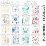 infographics mini concept... | Shutterstock .eps vector #562081339