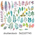 watercolor natural collection ... | Shutterstock . vector #562107745