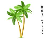 Tropical Palm Trees. Detailed...