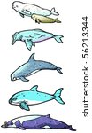 types of whales illustration | Shutterstock . vector #56213344