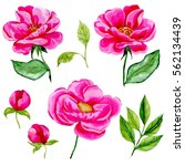 watercolor flower set   Shutterstock . vector #562134439