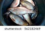 fresh fish  sold in the market.   Shutterstock . vector #562182469