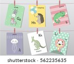 cute zoo alphabet with funny... | Shutterstock .eps vector #562235635