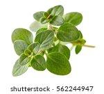 thyme leaves | Shutterstock . vector #562244947